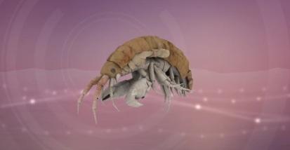Video: Killer Shrimp
